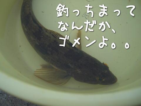 20070713_5.jpg