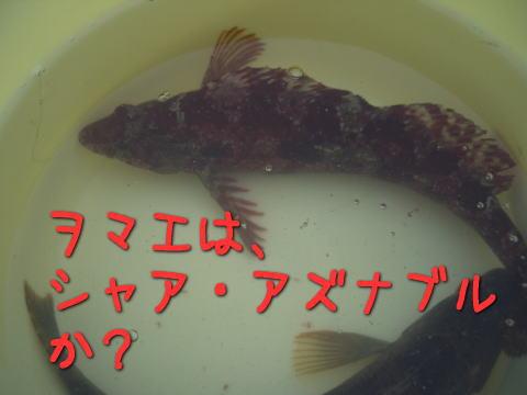 20070713_6.jpg