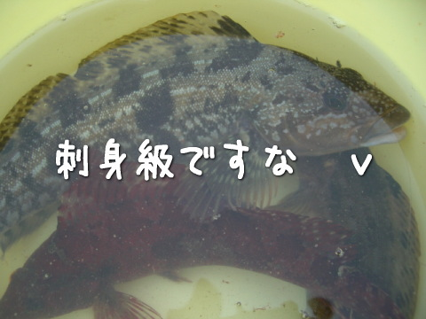 20070713_7.jpg