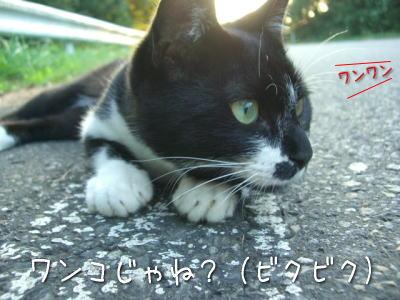 20070922n_7.jpg