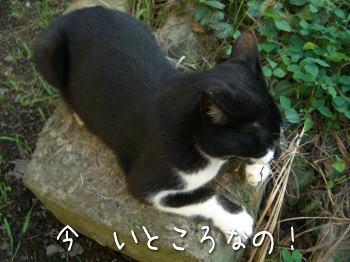 20070924n_1.jpg