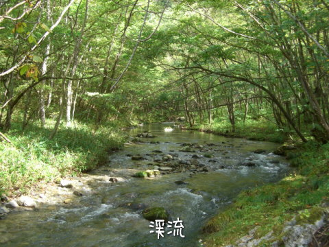 山根の渓流