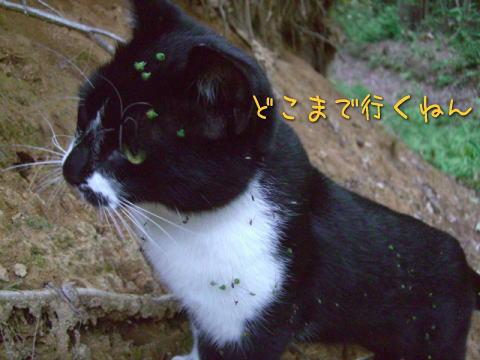 20071010_5.jpg
