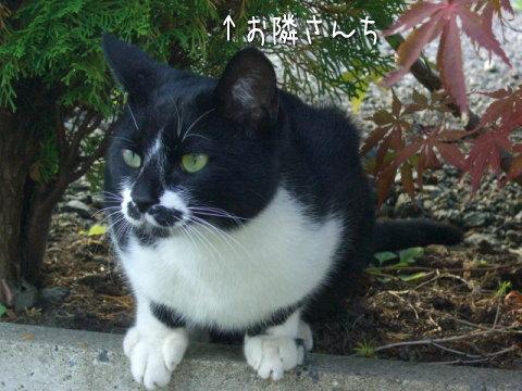20071013_9.jpg