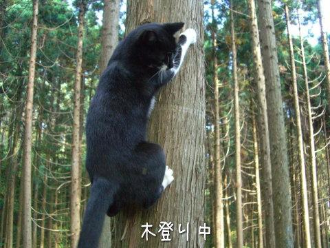 木登り猫 画像