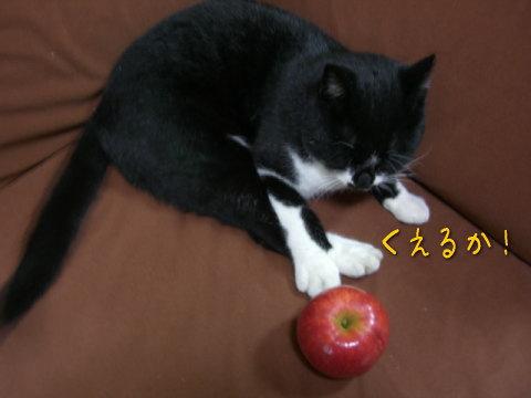 20071115_5.jpg