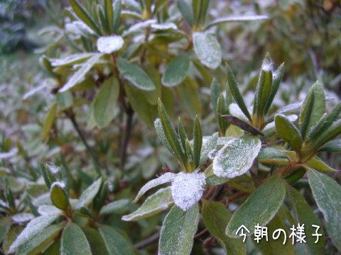 20071130_1.jpg