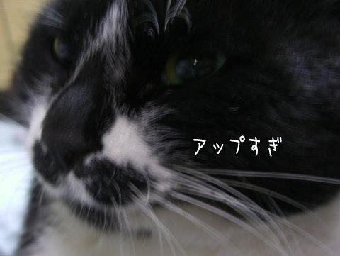 20071220_4.jpg
