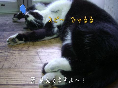 20071228_4.jpg