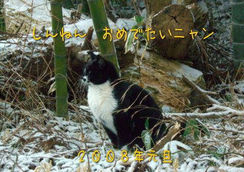 20080101_4.jpg