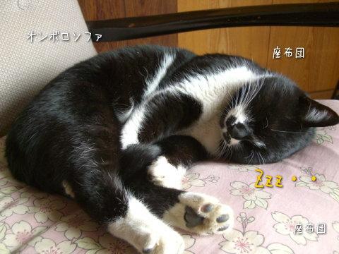 20080109_4.jpg