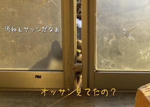 20080115_7.jpg