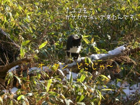 20080118_3.jpg