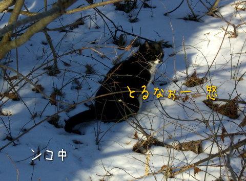 20080118_5.jpg