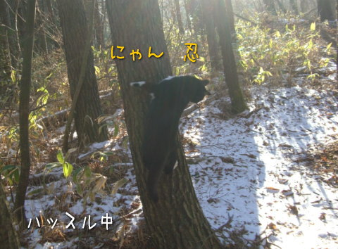 20080118_6.jpg