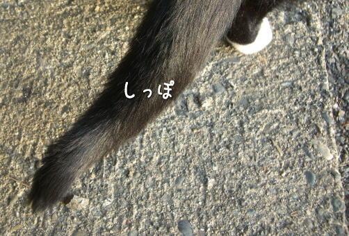 20080119_7.jpg