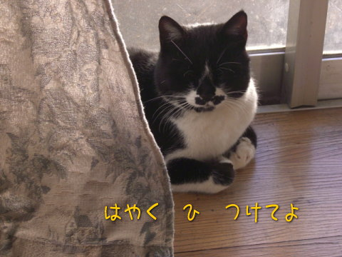 20080120_4.jpg