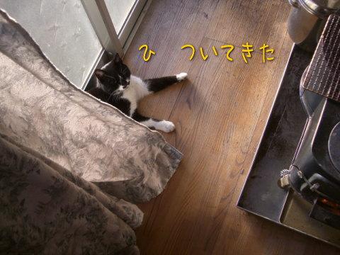 20080120_5.jpg