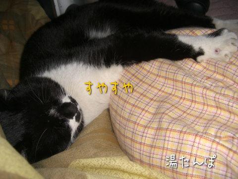 湯たんぽ猫