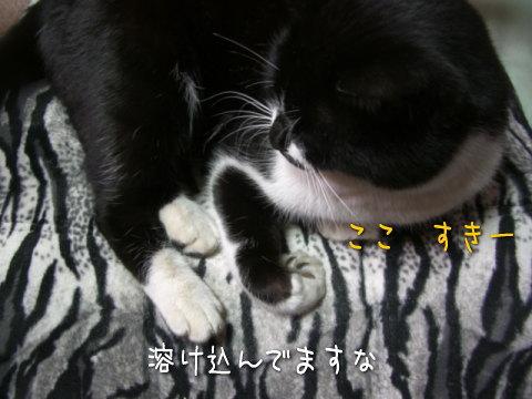 20080125_4.jpg