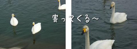 20080130_5.jpg