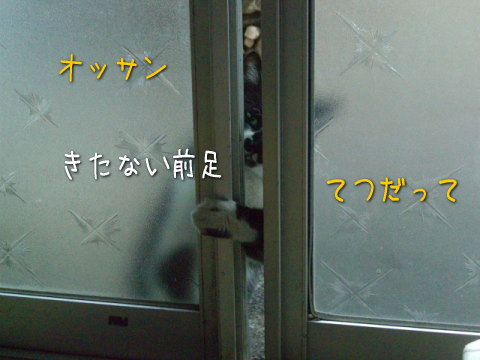 20080131_2.jpg