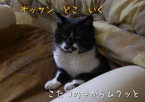 20080205_6.jpg