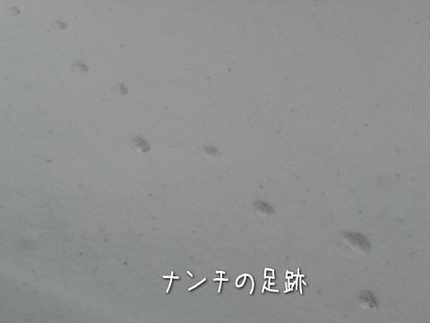 20080210_2.jpg