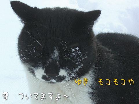 20080213_3.jpg