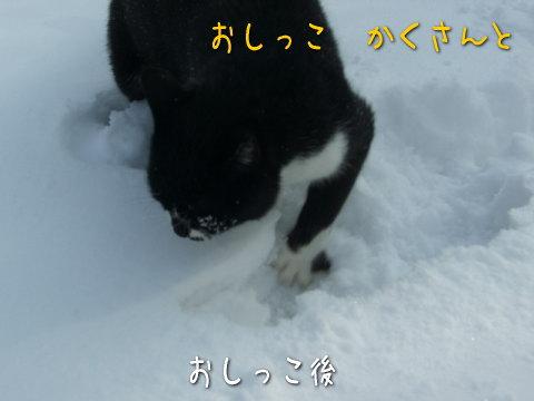 20080213_4.jpg