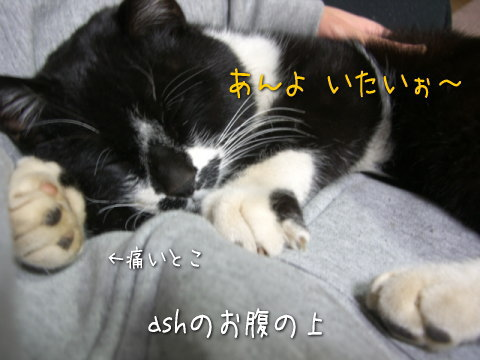 20080304_3.jpg