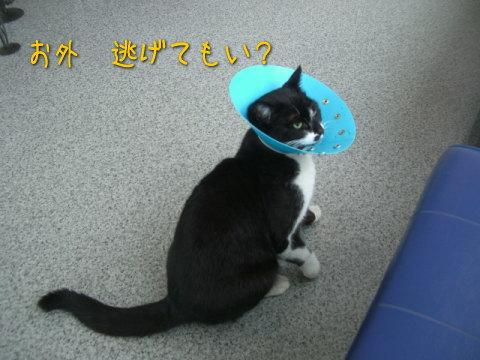 20080305_5.jpg