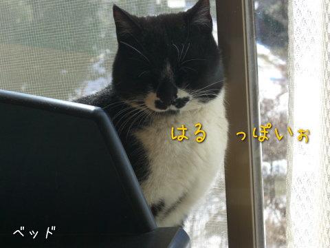 20080308_2.jpg