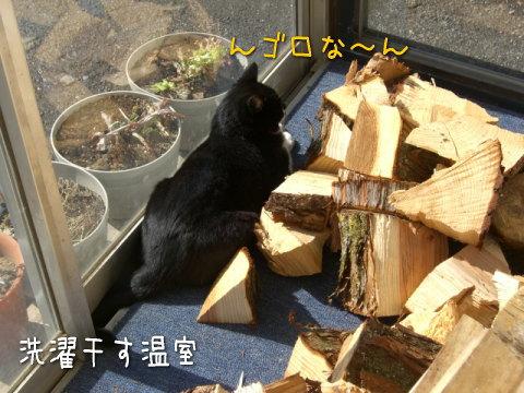 20080311_3.jpg