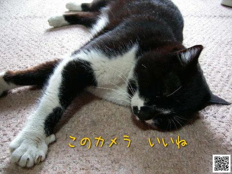 20080326_5.jpg