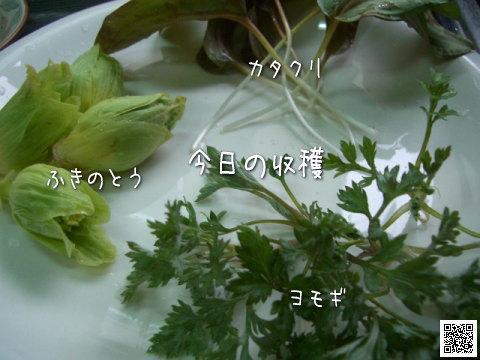 20080331_2.jpg