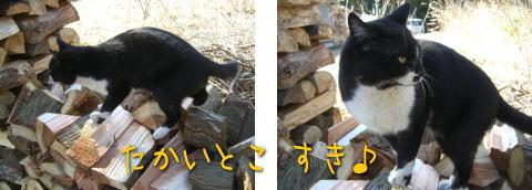 20080403_3.jpg
