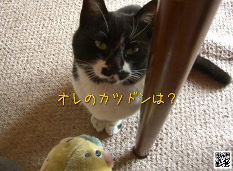 20080405_5.jpg