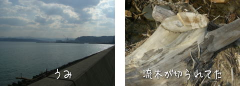 20080407_2.jpg