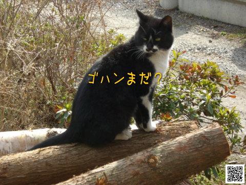 20080407_3.jpg