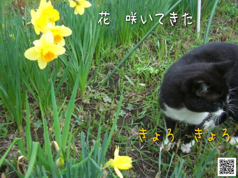 20080425_2.jpg