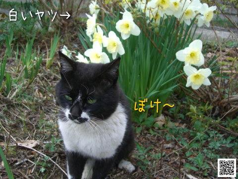 20080425_4.jpg