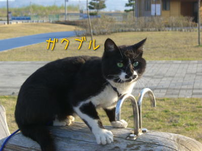 20080426_2.jpg
