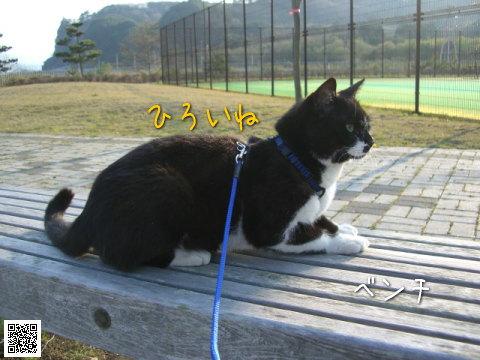 20080426_5.jpg