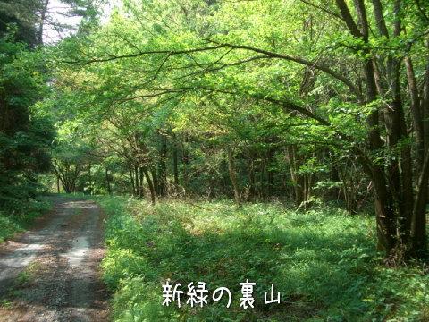 新緑の裏山