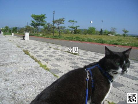20080605_4.jpg