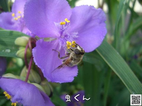 20080701_3.jpg