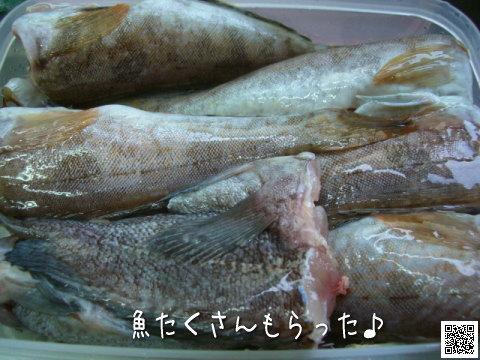 もらった魚たち