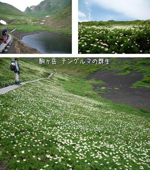 駒ヶ岳・チングルマ