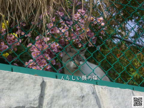 他の家の猫